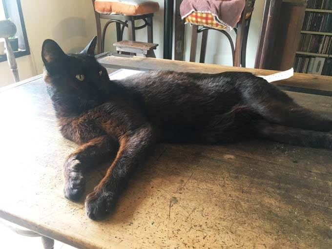 黒猫のハチさん