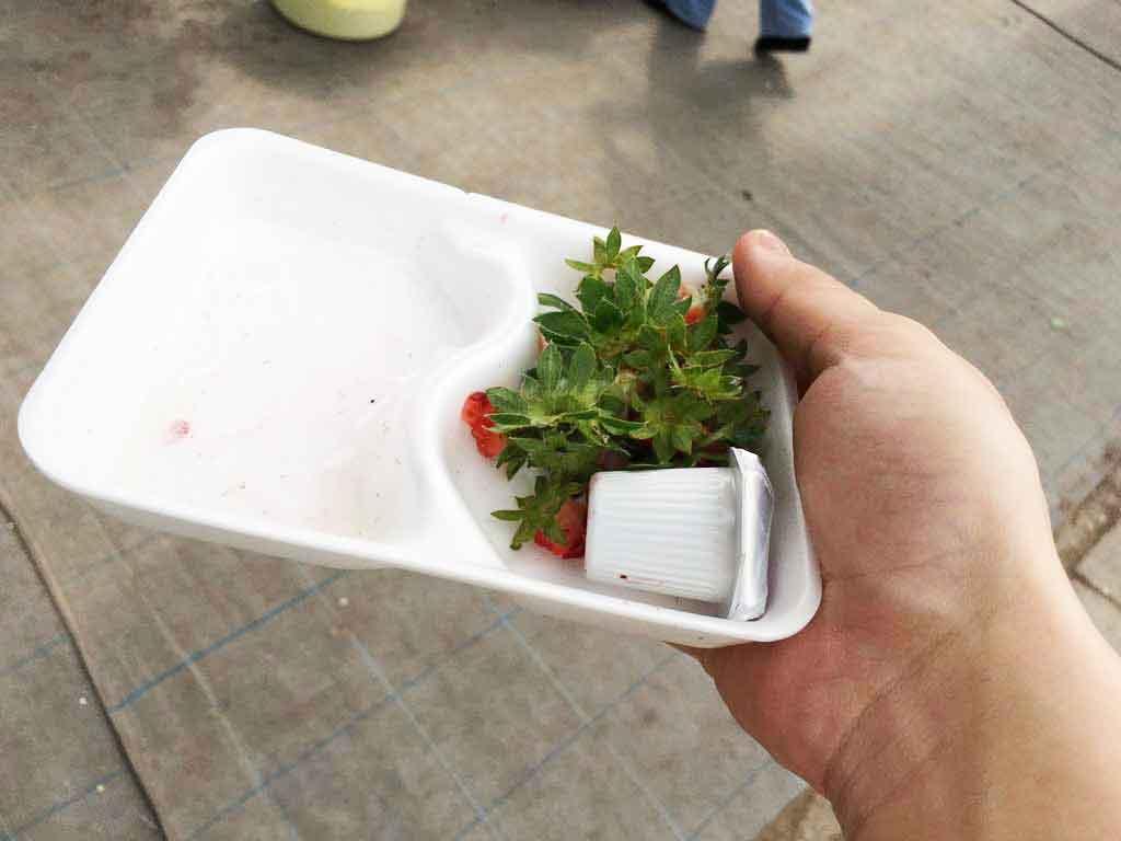 イチゴ20個以上、完食