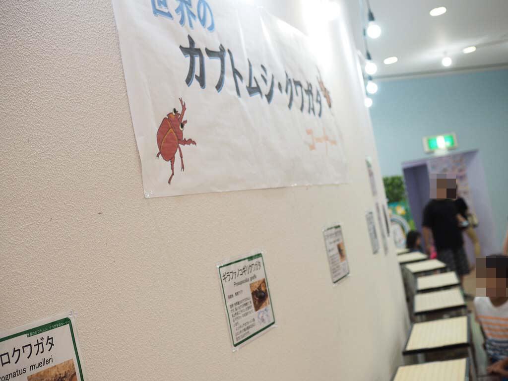 世界のカブトムシ・クワガタの展示