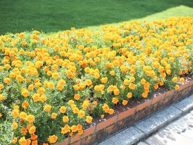 きれいな花たちがお出迎え